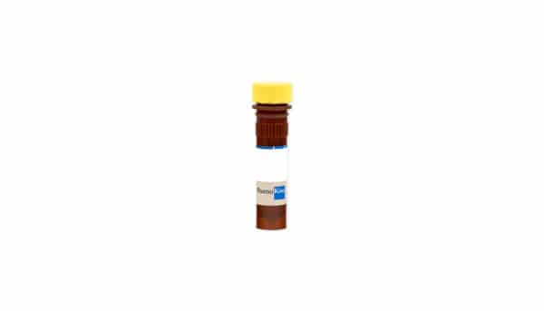 Caspase-3 Inhibitor Z-DEVD-FMK (2 mM)