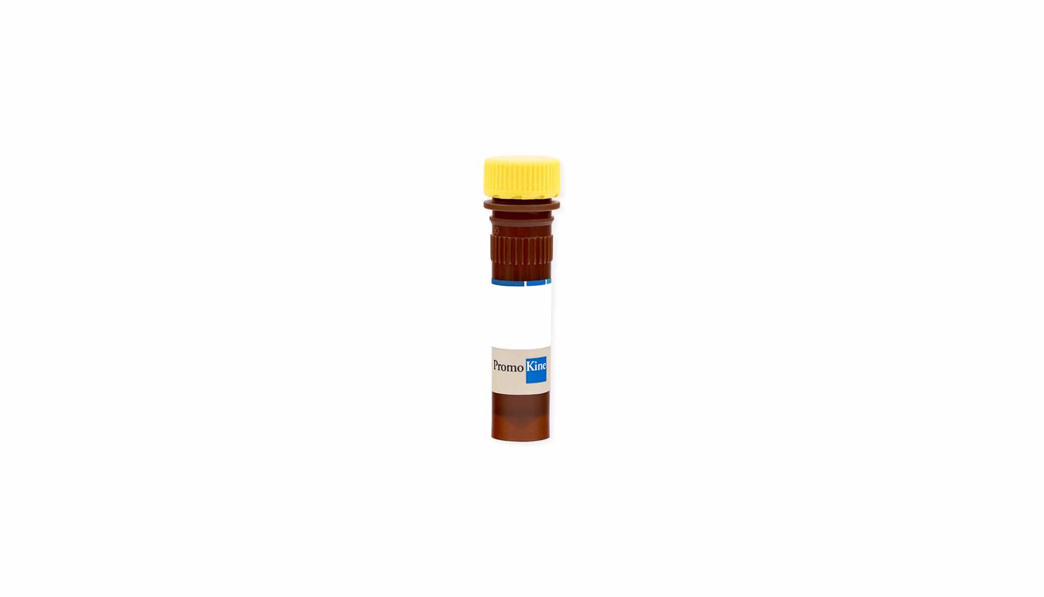 Annexin V-FITC Reagent