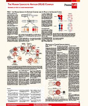 Scientific poster: Human Leukocyte Antigen Complex