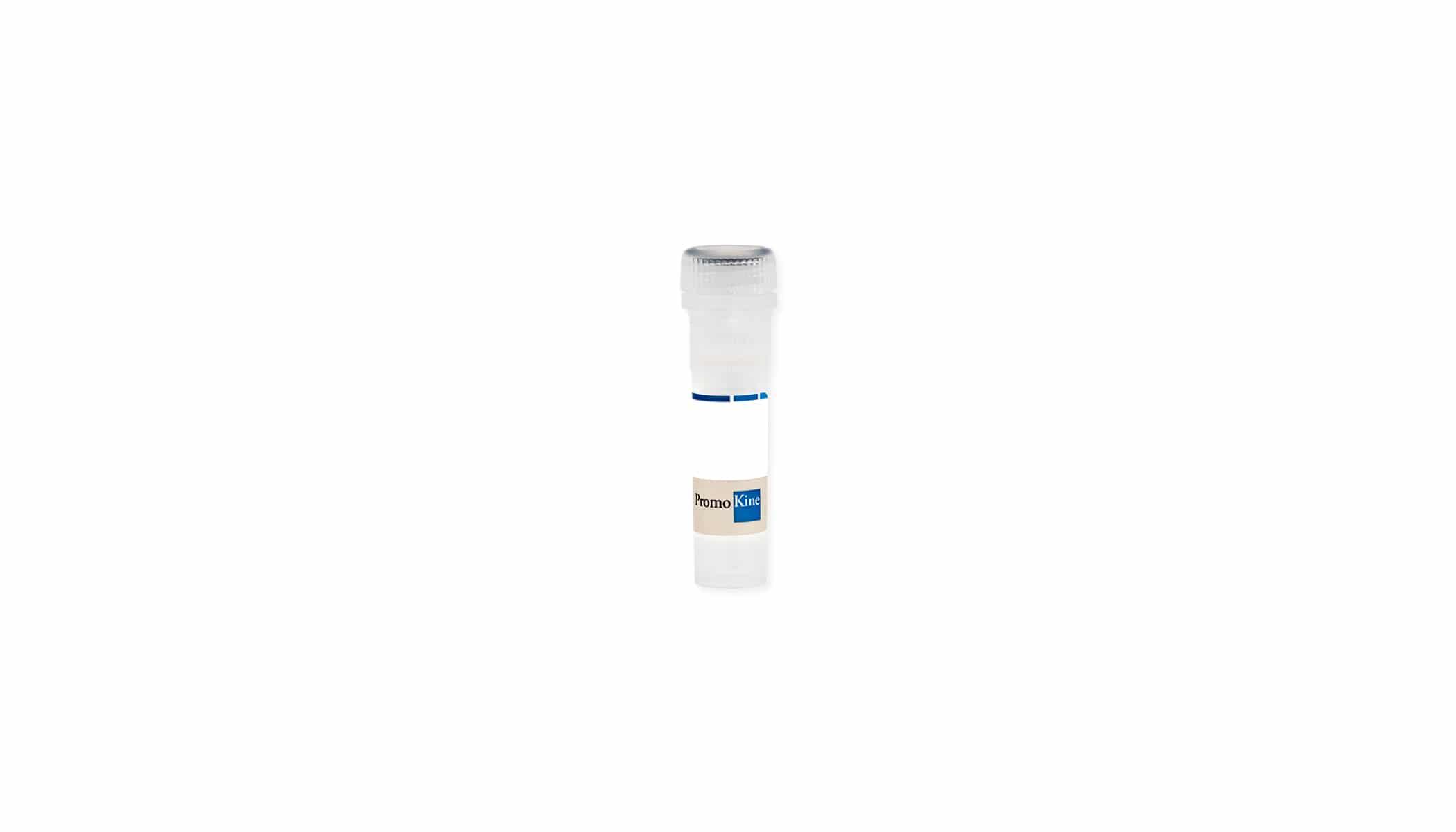 Activin Receptor-2A, human, recombinant (Sf9)