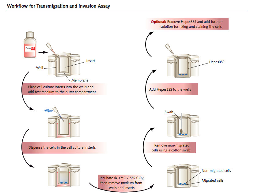 Workflow transmigration and invasion assay