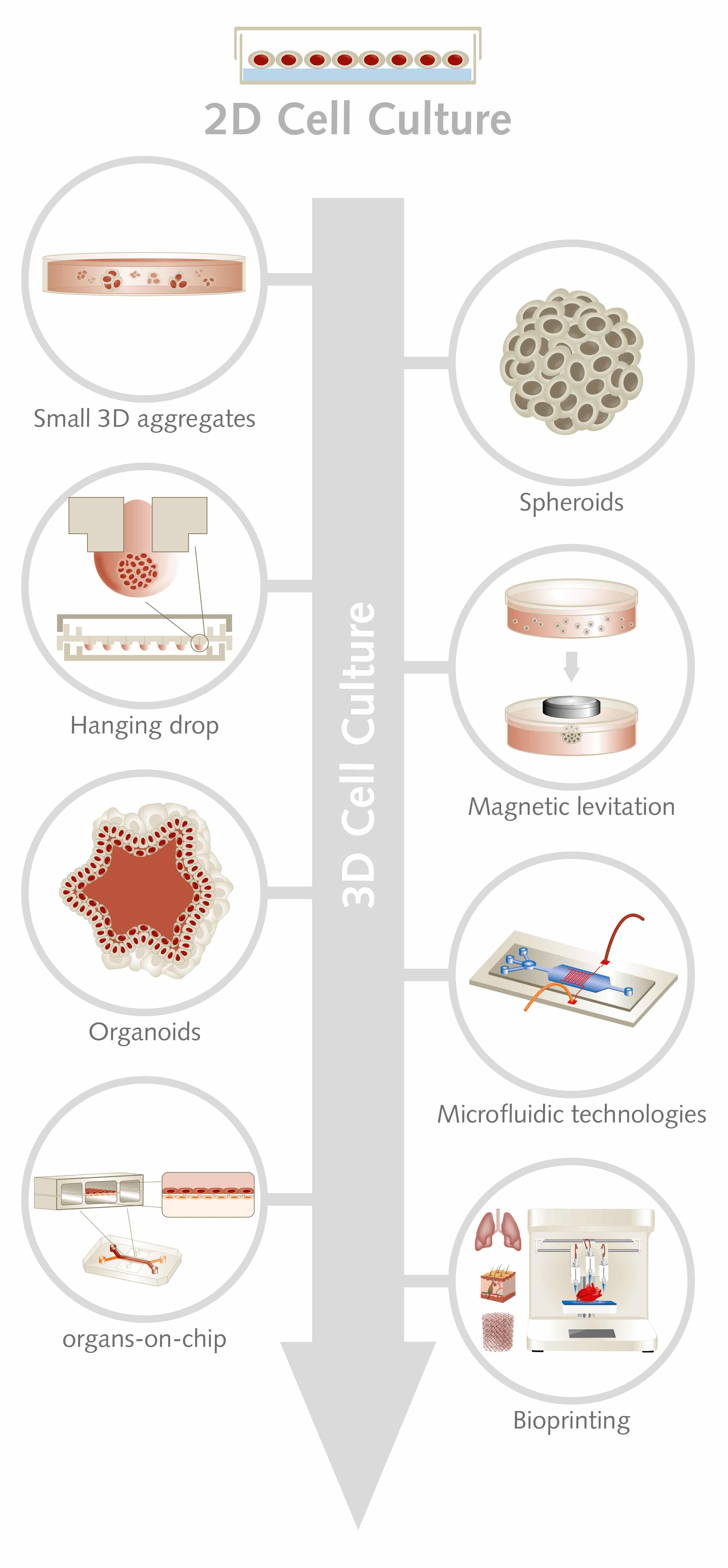 3D Cell Culture: Moving from simple technologies to sophisticated approaches